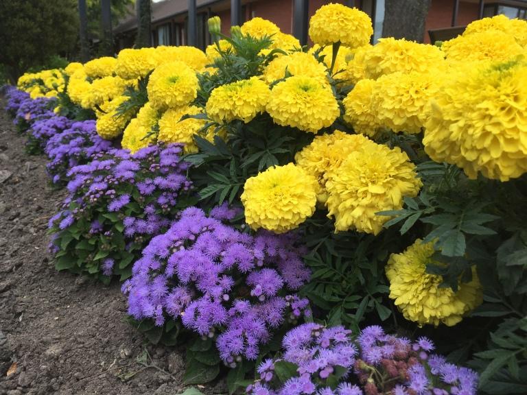 Pretty flowers, Rangiora Civic Centre